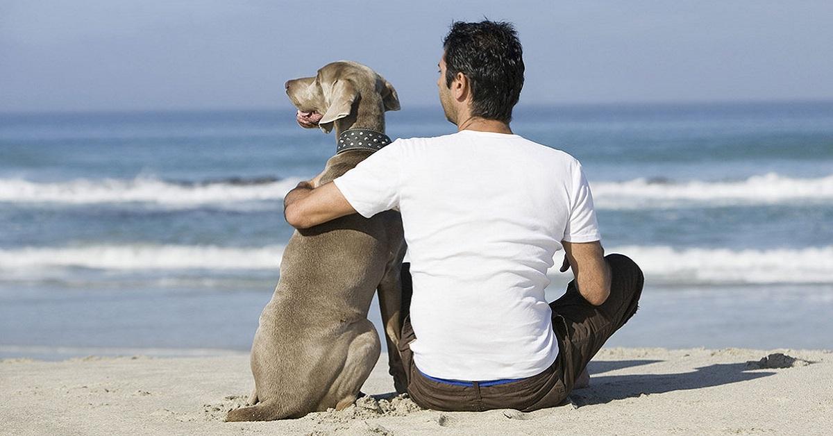 cane e uomo di spalle sulla spiaggia