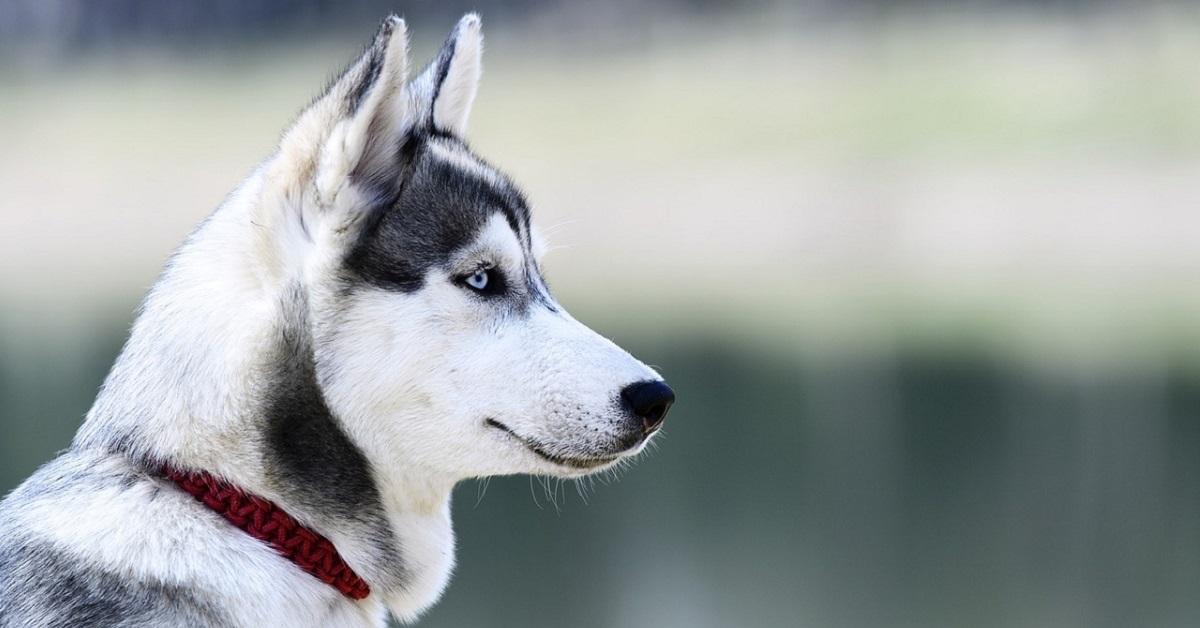 addestrare il cane a proteggerti