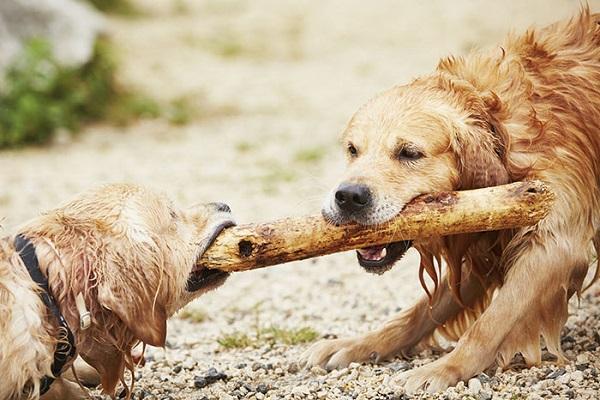 cani con bastone