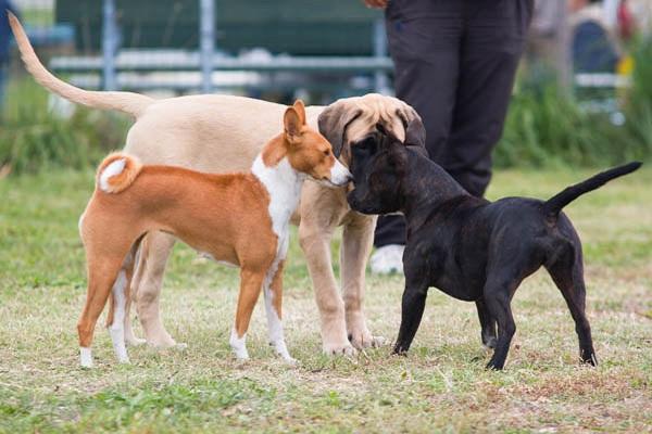 incontro tra cani