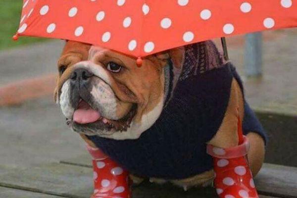 cane con l'ombrello
