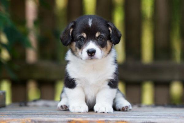 Cura dei cuccioli da 0 a 12 settimane: cosa sapere
