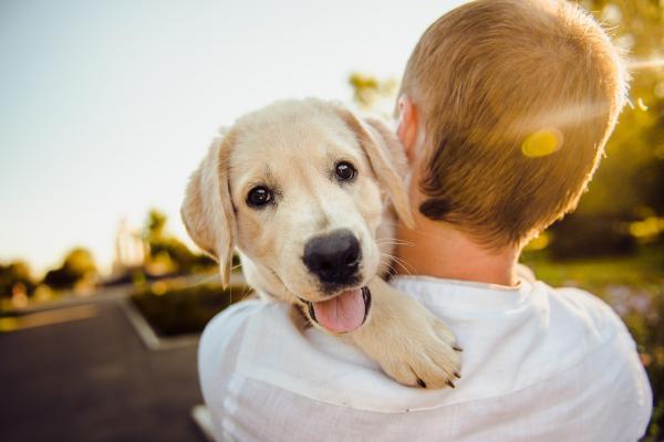 cane e padrone