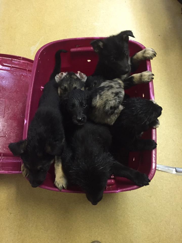 cuccioli-scatola