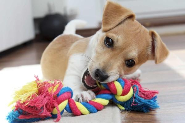 un cucciolo gioca