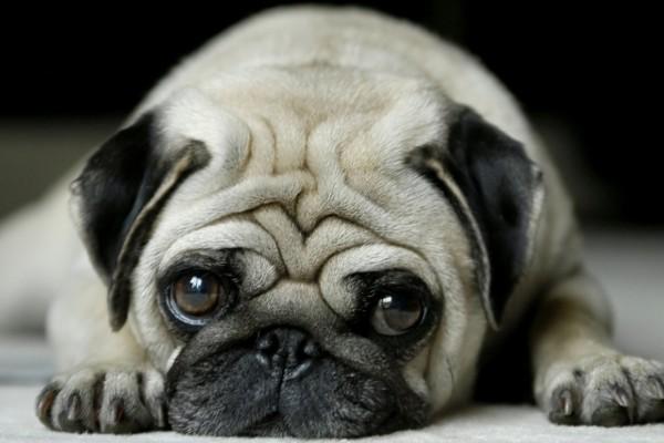 cucciolo triste