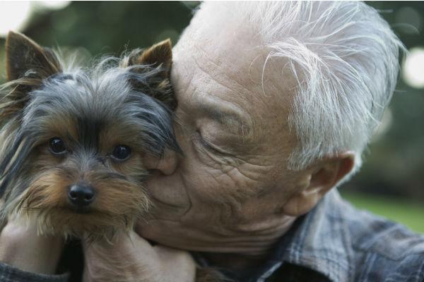 Demenza senile nel cane: segni e cosa fare