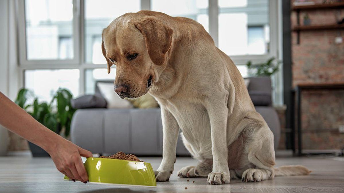 cane che non vuole mangiare la pappa