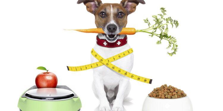 cane a dieta