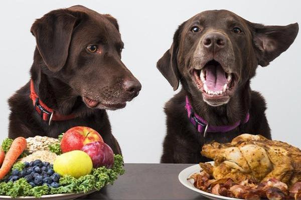 Di quante calorie ha bisogno un cane?