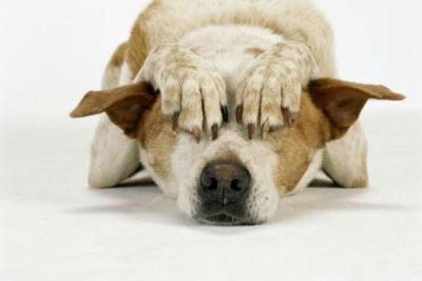 Disturbi d'ansia compulsivi nel cane: quali sono e cosa fare