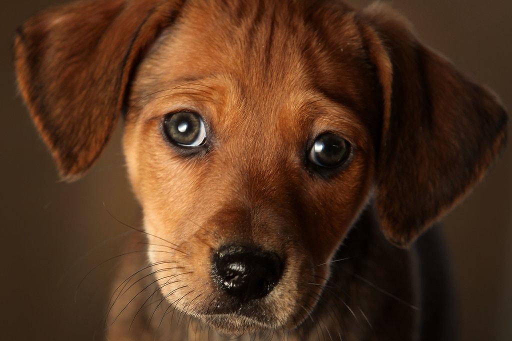 espressione-cane