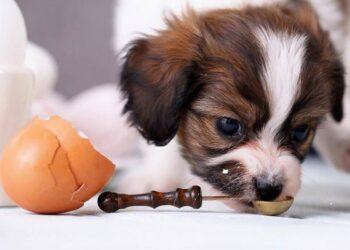 cani e farine animali