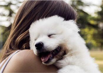 abbracciare cane