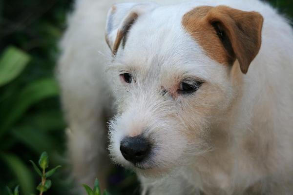 Glicemia alta nel cane: che si fa?