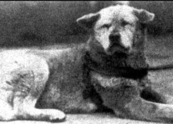 hachiko-storia-cane-fedele