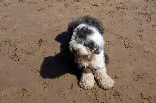 Al cane in fin di vita viene rovinata l'ultima passeggiata da una multa