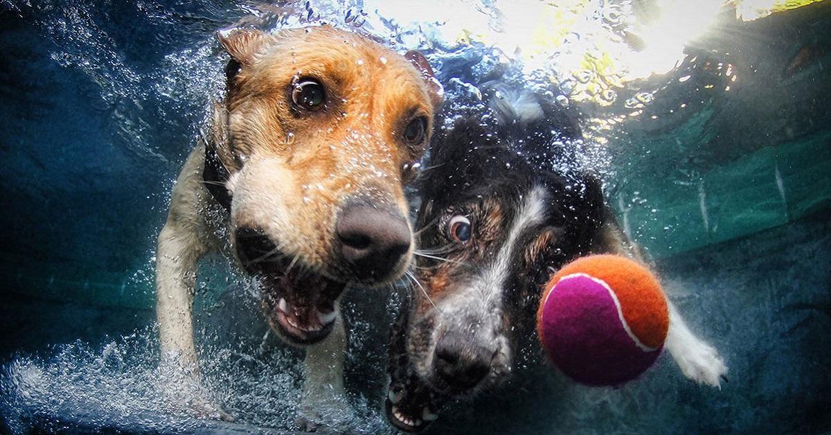 cani giocano in acqua