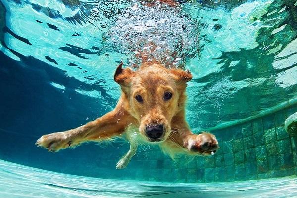 I cani nuotano? Ecco tutto ciò che c'è da sapere