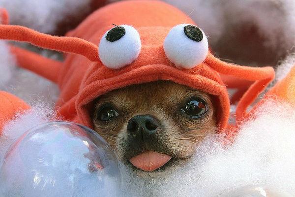 I cani possono mangiare i gamberetti?