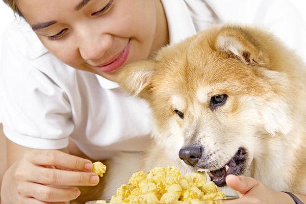 cane che mangia popcorn