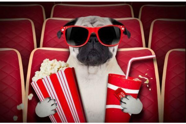 cane al cinema