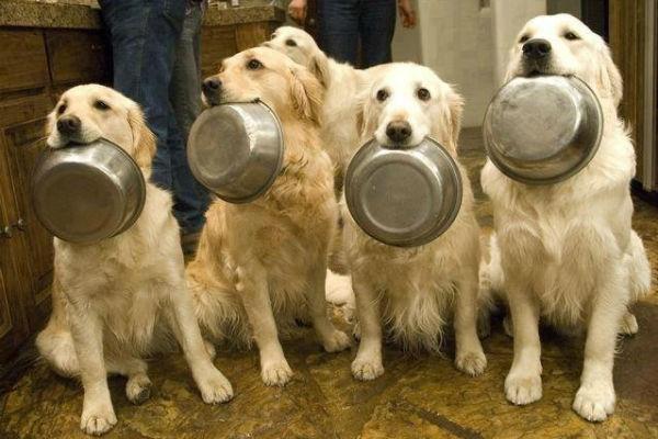 cani in casa