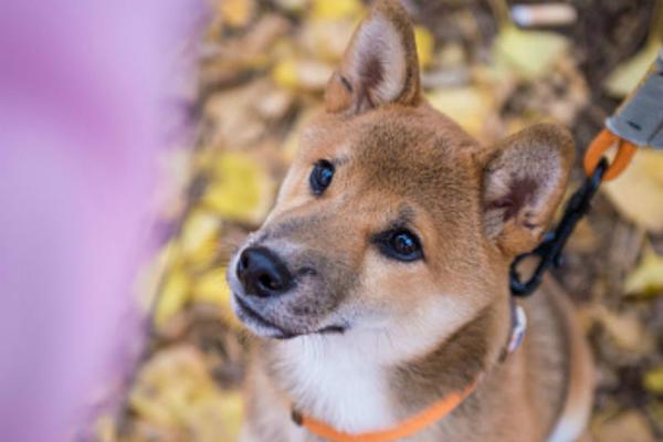 I cani possono mangiare la cannella?