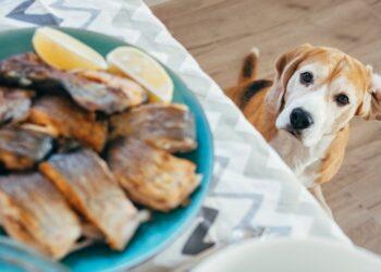 cane goloso di pesce