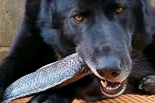 cane con pesce in bocca