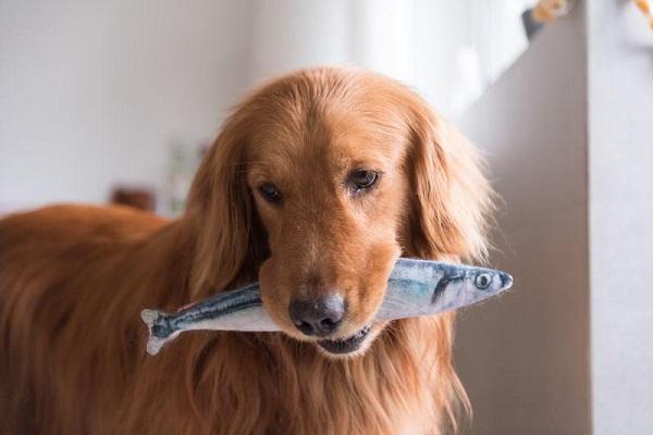 cane con tonno