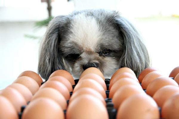 cane davanti a uova