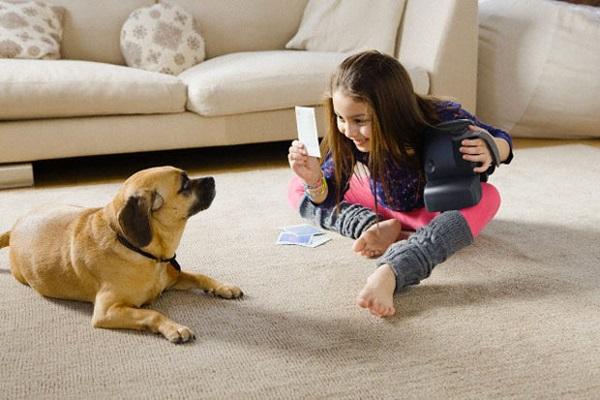 cane guarda foto