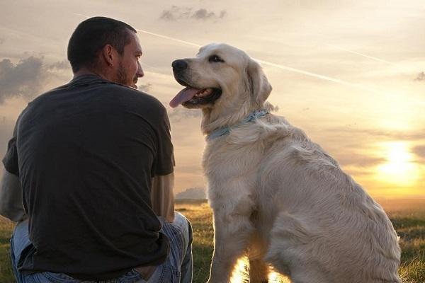 cane guarda padrone