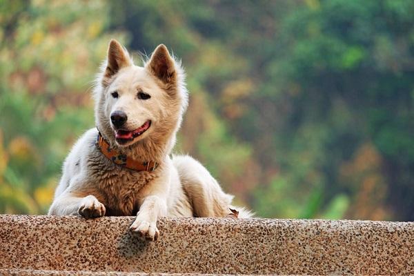 cane su muretto