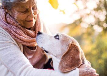 un cane viene abbracciato