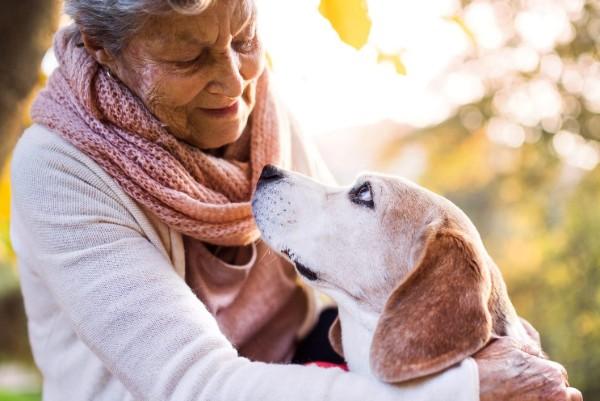 un cane anziano viene accarezzato