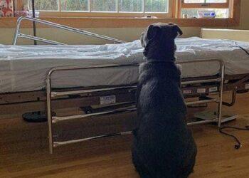il-cane-attende-invano-il-ritorno-del-proprietario