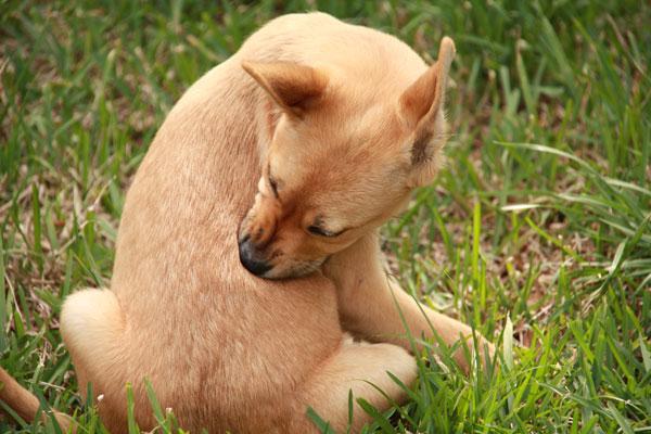cane che si morde