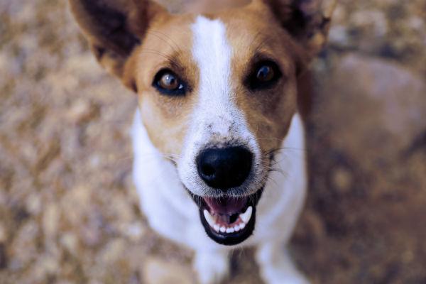 Bocca secca nel cane: cosa sapere e cosa si può fare