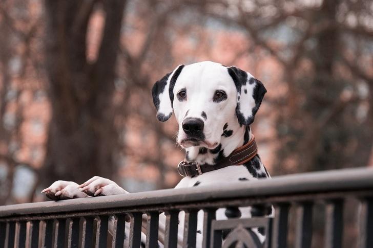 Cani abbandonati in Olanda? Non più!
