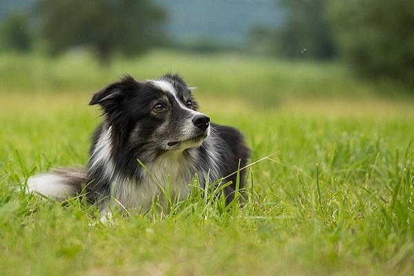 Incontinenza nel cane: cosa succede, cosa sapere