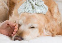 blefarite nel cane