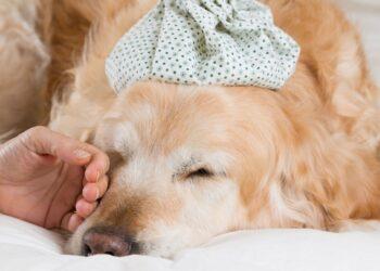 cane con febbre alta