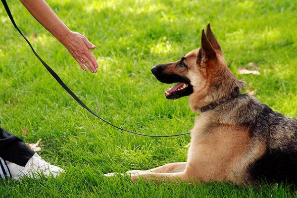 cane per terra