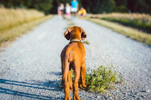 cane e famiglia