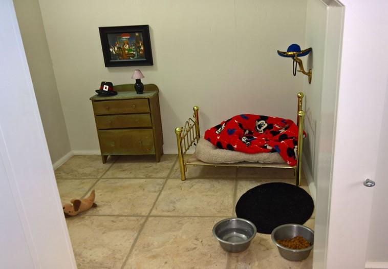 interno-stanza-cane