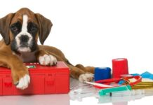 cane boxer e kit pronto soccorso