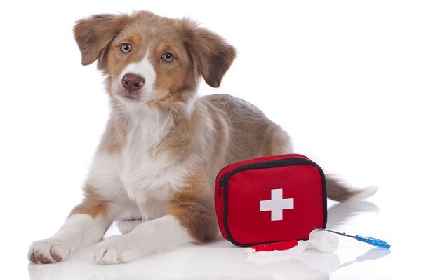 cane e pronto soccorso