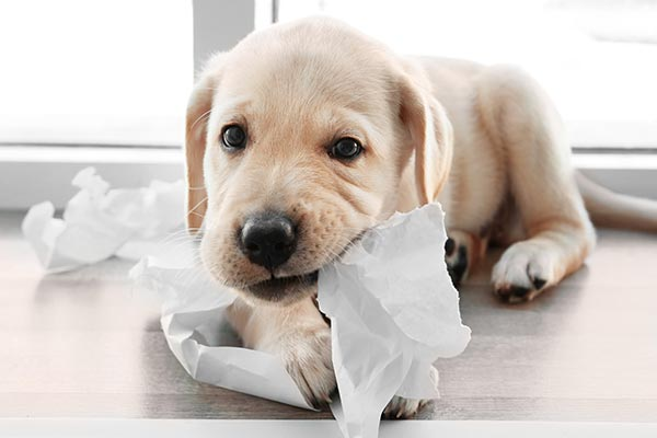 Cani e lesione da cavo elettrico: come possiamo aiutarli?